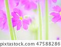 4월의꽃 47588286