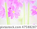 4월의꽃 47588287