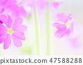 4월의꽃 47588288