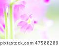 4월의꽃 47588289