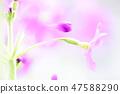 4월의꽃 47588290