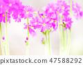 4월의꽃 47588292