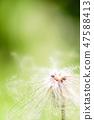 4월의꽃 47588413