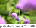 4월의꽃 47588484