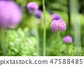 4월의꽃 47588485