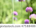 4월의꽃 47588486