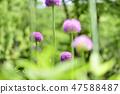4월의꽃 47588487
