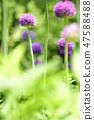 4월의꽃 47588488