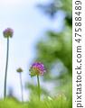 4월의꽃 47588489