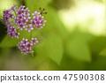 4월의꽃 47590308