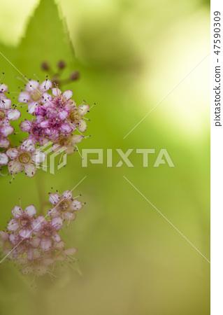 4월의꽃 47590309