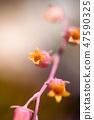 4월의꽃 47590325