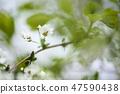 4월의꽃 47590438