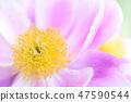 4월의꽃 47590544