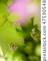 4월의꽃 47590548
