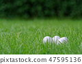 White Easter eggs in a grass of a green lawn 47595136