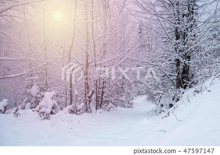 Snow covered trees in the winter forest 47597147
