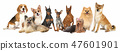 Group of Various Size Dogs 47601901