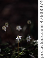 Baikawauran Photographed at Kochi Prefectural Makino Botanical Garden 47608974
