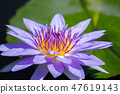 เอเชีย, ไต้หวัน, Tainan White River Lotus เอเชีย, ไต้หวัน, Tainan Lotus 47619143