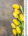 Yellow tulips background 47625511