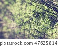 Bamboo forest in the morning. Selective Focus. 47625814
