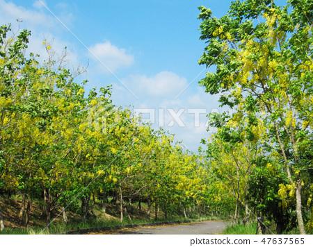 花果植物 47637565