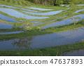 Rice terrace 47637893