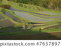 Rice terrace 47637897