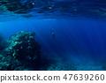 Free diver underwater in ocean with rocks 47639260