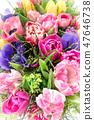 花束 鬱金香 毛茛屬植物 47646738