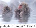 지고 쿠 다니 야생 원숭이 공 원의 스노우 몽키 47649611