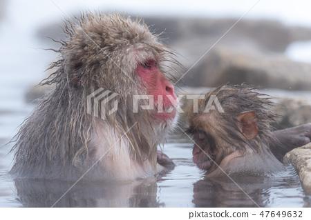 지고 쿠 다니 야생 원숭이 공 원의 스노우 몽키 47649632