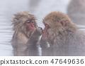 지고 쿠 다니 야생 원숭이 공 원의 스노우 몽키 47649636