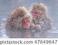 지고 쿠 다니 야생 원숭이 공 원의 스노우 몽키 47649647