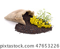 Rapeseed with flowers. 47653226