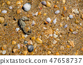 dried seahorse, shells and stones on the sand beach. 47658737