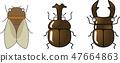 ชุดแมลงน่ารัก (ด้วงกวางและกึ่ง) เวกเตอร์ 47664863