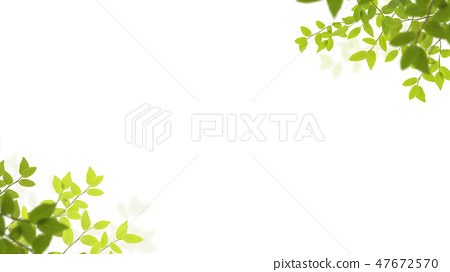 배경 - 신록 - 흰색 배경 47672570