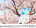Cherry Blossoms 47676865