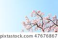 Cherry Blossoms 47676867