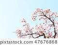 Cherry Blossoms 47676868