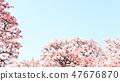 Cherry Blossoms 47676870