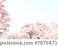Cherry Blossoms 47676871
