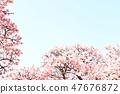 Cherry Blossoms 47676872