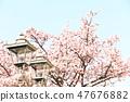 Cherry Blossoms 47676882