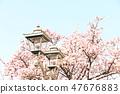 Cherry Blossoms 47676883