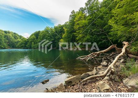lake among primeval beech forest 47681577