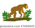 monkey in green tree 47689605