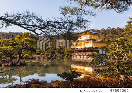 Kinkakuji Temple . Golden Pavilion at Kyoto  Japan 47693066